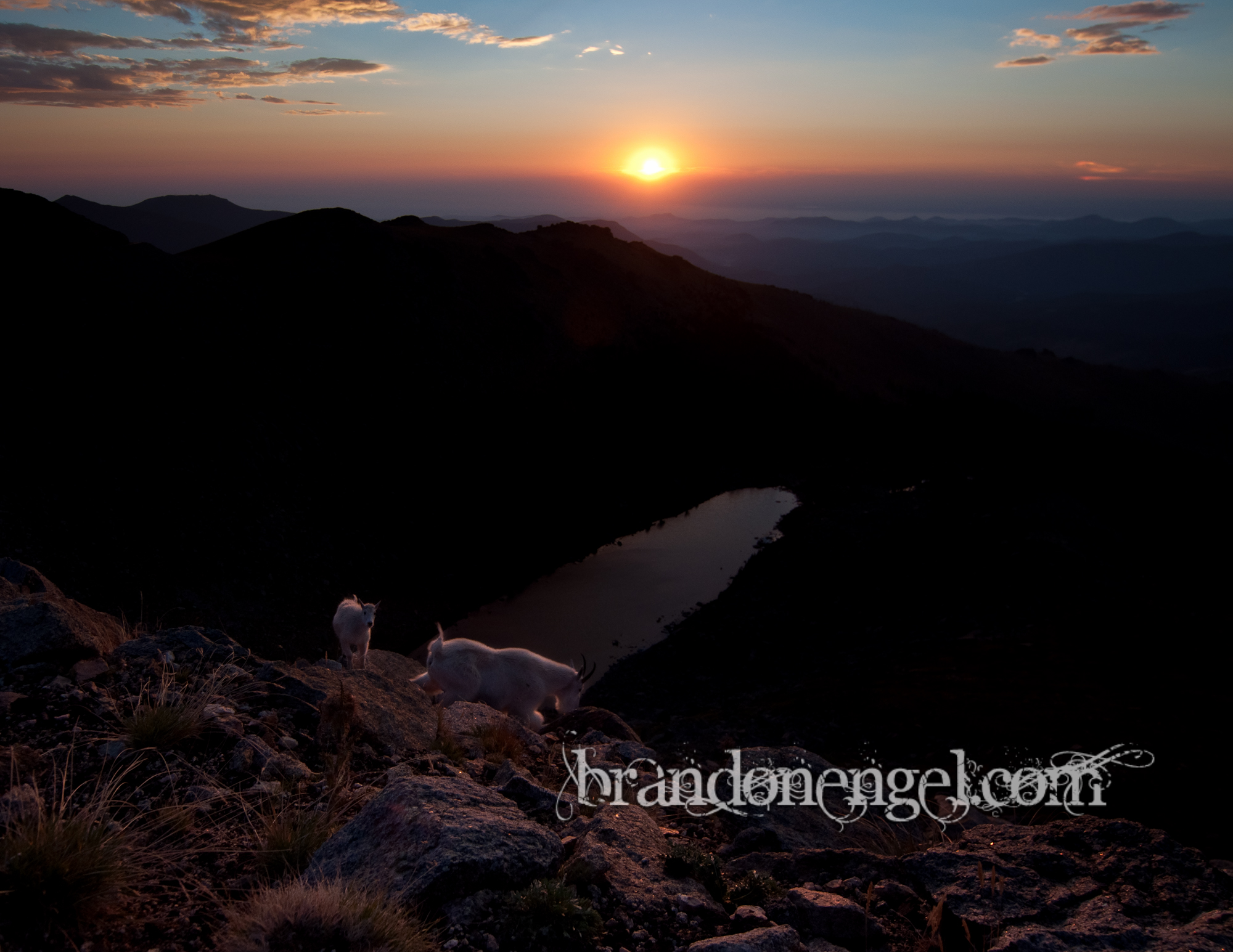 Mountain Goats at sunset